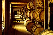 Jack Daniels whiskey whisky maturing in barrels in old store warehouse at the Lynchburg distillery, Tennessee, USA