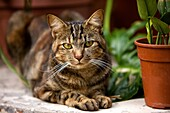 DOMESTIC CAT WITH PLANTS, NAMIBIA