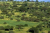 Savanna Landscape, Tarangire Park in Tanzania