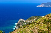Vineyard over Corniglia, Cinque Terre National Park, Province of La Spezia, Liguria, northern Italy, Europe