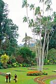 Peradeniya Botanical Gardens, Kandy, Sri Lanka