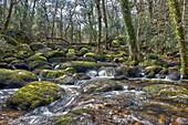 Becky Falls Woodland Park And Nature Trail, Also Known As Becka Falls, Manaton, Newton Abbott, Devon. Uk.