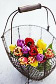 Wire basket with rainbow Tulip bouquet.