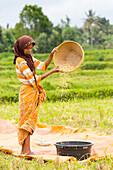 Indonesian woman sieving rice, Tetebatu, Lombok, Indonesia