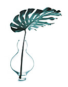 Philodendron leaf in a vase, Plant