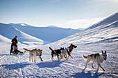 Dog sledge in winter, Spitzbergen, Svalbard, Norway