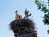 Stork's Nest on the Church in Strodehne, Brandenburg, Germany