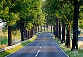 Avenue at Brandenburg an der Havel, Brandenburg, Germany