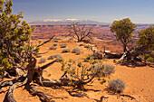 Shafer Trail Overlook, Canyonlands National Park, La Sal Mountains, Utah, USA
