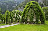 Weidendom in National Park Center Gesäuse, Ennstaler Alps, Johnsbach, Styria, Austria