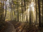 Fog in the Viennese forest, near Baden near Vienna, Lower Austria, Austria