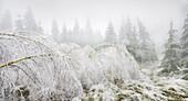 iced forest in the Wechselgebiet, Lower Austria, Austria