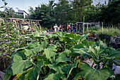 Princess Garden , Urban Gardening,  mobile urban farm with herbs and vegatable, Kreuzberg, Berlin