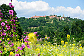 Field full of flowers with mountain village of Dilsberg in the background, Neckar, Baden-Wuerttemberg, Germany
