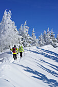 Two persons back-country skiing ascending through winter forest towards Hochries, Hochries, Samerberg, Chiemgau range, Chiemgau, Upper Bavaria, Bavaria, Germany
