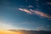 Möve im Abendhimmel am Ostseestrand, Dierhagen, Fischland-Darß-Zingst, Mecklenburg Vorpommern, Deutschland