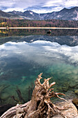 Root in lake Walchensee at low tide in front of Alpine panorama, Lake Walchensee, Alps, Upper Bavaria, Bavaria, Germany