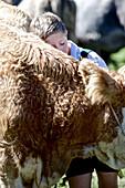 Boy wearing traditional clothes snuggling a cattle, Viehscheid, Allgau, Bavaria, Germany