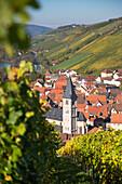 Blick auf Ortschaft mit Kirchturm durch Weinstock am Weinberg Marsberg im Herbst, Randersacker, nahe Würzburg, Franken, Bayern, Deutschland, Europa