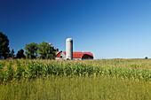 Farm im Maisfeld, Provinz Quebec, Kanada