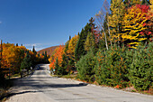 Park road with autumn color at the Park Mont Tremblant, Province Quebec, Canada