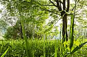 Schilf und Bäume in Idrosee-Mündung, Baitoni, Trentino, Italien