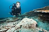 Scuba Diver and Tasseled Wobbegong, Eucrossorhinchus dasypogon, Triton Bay, West Papua, Indonesia
