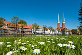 Flowers on the grass in front of Luebeck Cathedral, Hanseatic City, Luebeck, Schleswig-Holstein, Germany