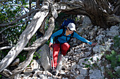 A young woman climbing underneath a juniper tree, Selvaggio Blu, Sardinia, Italy, Europe