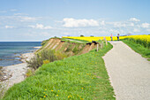 Cycling along a field, on a cliff near Travemuende, Luebeck Bay, Baltic Coast, Schleswig-Holstein, Germany