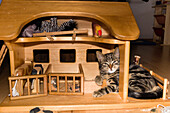 domestic cat resting in dollhouse, Germany