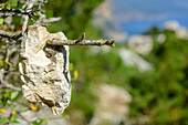 Stone hanging in branch, way marker, Selvaggio Blu, National Park of the Bay of Orosei and Gennargentu, Sardinia, Italy