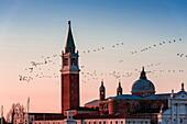 Birds flying over St. Mark's Campanile, Veneto, Italy, Venice, Veneto, Italy