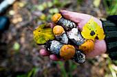 Close up of hand holding fungi, Ykaterinburg, Ural, Russia