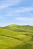 Hills and blue sky in rolling landscape, Keene, California, United States