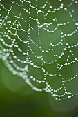 Close up of water droplets on spider web outdoors, Miami Beach, Florida, United States