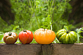 Colorful heirloom tomatoes on banister outdoors, Miami Beach, Florida, United States