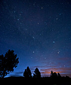 Silhouette of trees under starry night sky, Lake Almanor, CA, USA
