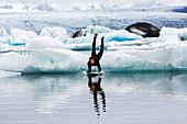 Caucasian surfer leaping on board into glacial water, Jokulsarlon, Iceland, Iceland