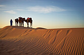 Silhouette of guide with camels on sand dunes in desert landscape, Sahara Desert, Morocco, Morocco