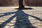 Shadow of dead tree on cracked earth in desert landscape, Sesriem, Karas, Namibia