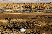 Aerial view of nomadic campsite in rocky remote landscape, Ulgii, Bayan Ulgii, Mongolia