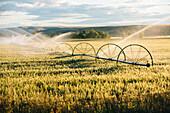 Irrigation system watering crops on farm field, Joseph, Oregon, USA