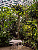France, Paris, Jardin d'Auteuil, interior of the greenhouse, tropical plants, table and chairs