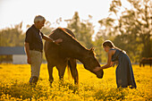 Caucasian man and granddaughter petting horse in field