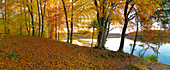 Indian summer, Forest in autumn colours at Langbuergner See, Chiemgau, Bavaria, Germany