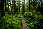 OLYMPIC NATIONAL PARK, WASHINGTON, USA. A lush forest and a boardwalk on the coast of Olympic National Park, Washington.