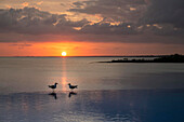 Two gulls on edge of infinity pool in the Bahamas at sunset.