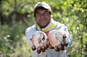 One Tarahumara man carves wooden balls in preparation for the Rarajipari (a traditional race where they run kicking a wooden ball) in Urique, Chihuahua, Mexico.