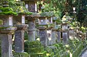 Stone lanterns at dusk at Kasuga Taisha Shrine, UNESCO World Heritage Site, Nara, Kansai, Japan, Asia